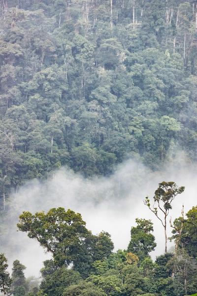Sumaco area rainforest