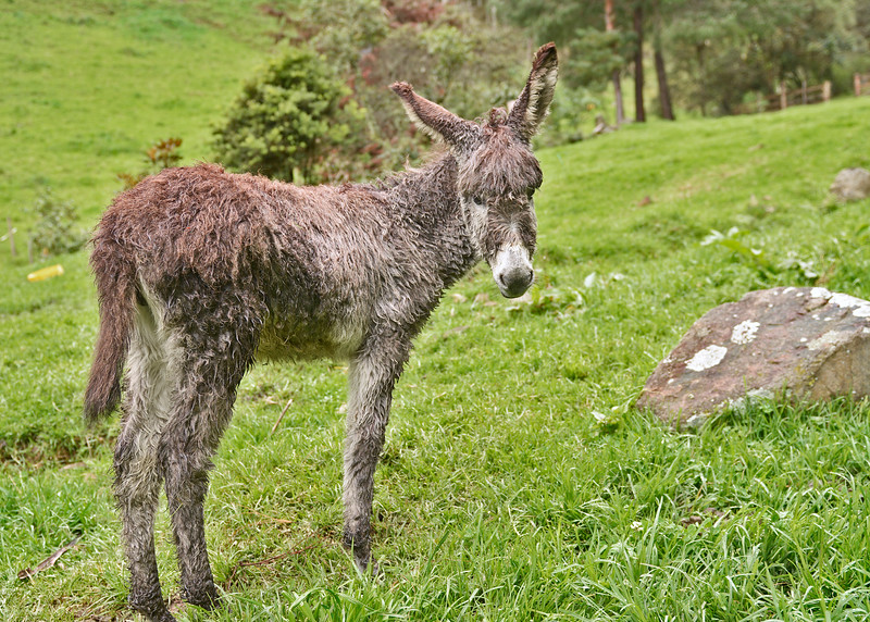3/9/16 - We started our day by going up and visiting the donkeys. This is the cute little baby.This is the cute little baby.
