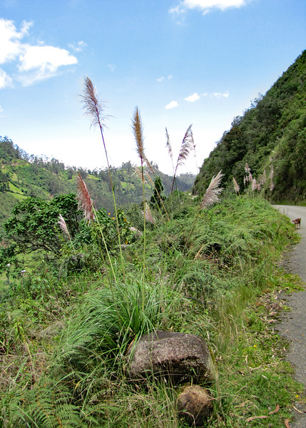 3/9/16 - Beautiful Pampas Grass along the road we walked.