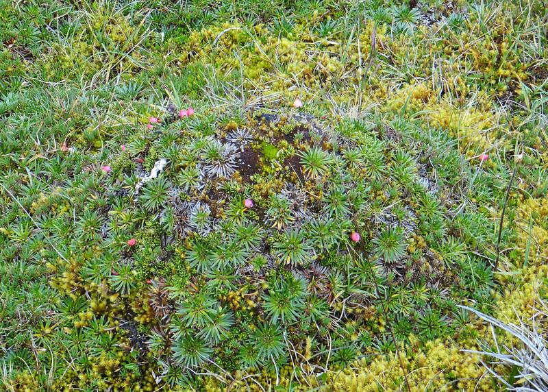 6/23/15 - So much different vegetation.