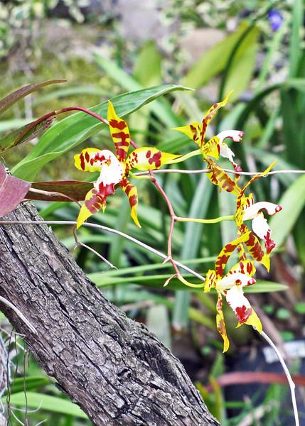 11/18/15 - Pretty orchid.