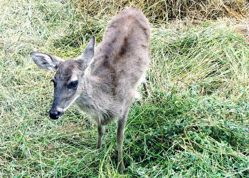 11/18/15 - Deer.