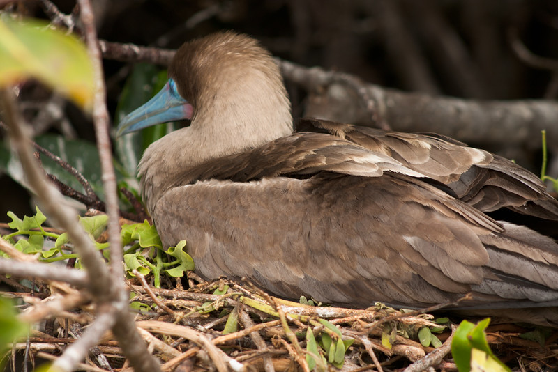 Bird at Home : Journey into Genovesa Island in the Galapagos Archipelago