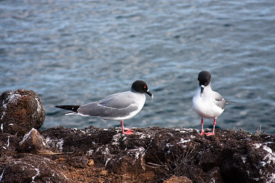 Journey into Baltra Island in the Galapagos Archipelago 6 Twin Birds