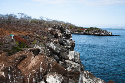 Journey into Baltra Island in the Galapagos Archipelago 4 Rocky Shore