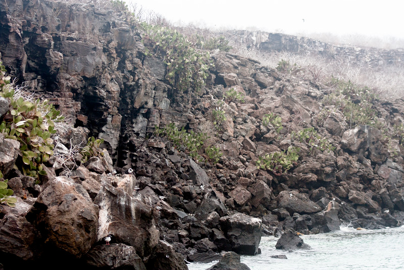Rocks to the Ocean : Journey into Genovesa Island in the Galapagos Archipelago
