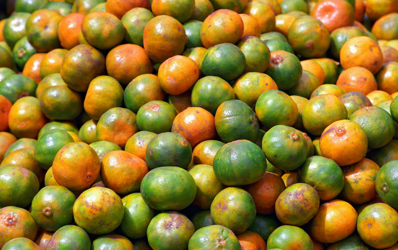 Yellow and Green Oranges
