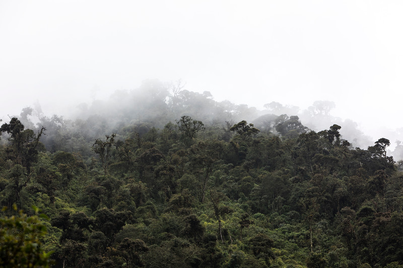 Cloud Forest at Guango Lodge