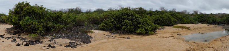 Floreana Island pano