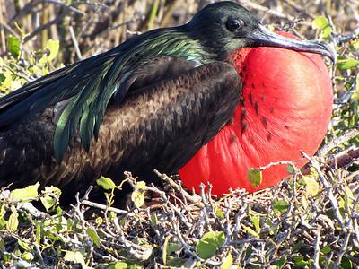 Ecuador and the Galapagos Islands - 2009