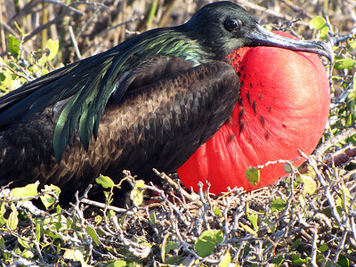 Galapagos Islands - 2009