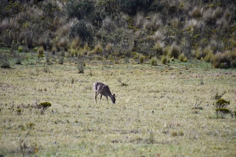 Cotopaxi National Park, Cotopaxi, Ecuador