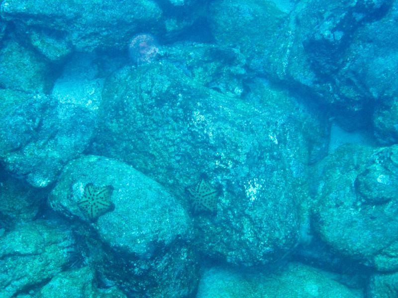 WEDNESDAY AM Rabida Island (Jervis)