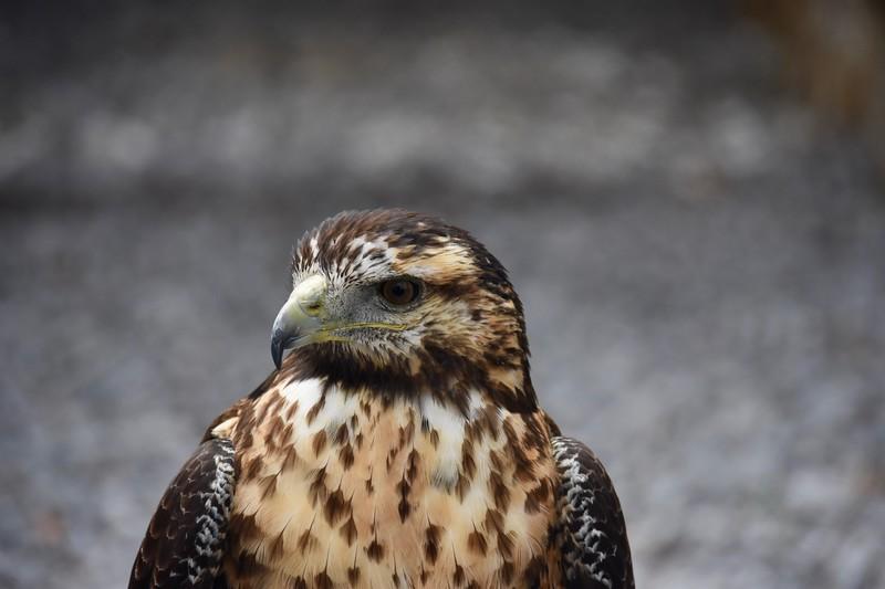 Condor Park, Otavalo, Imbabura, Ecuador