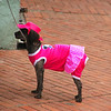 "A dog dressed up in a pink outfit - Quito, Ecuador.  A travel photo from Quito, Ecuador. <a href=""http://nomadicsamuel.com"">http://nomadicsamuel.com</a>"