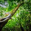 Amoungst the Jungle