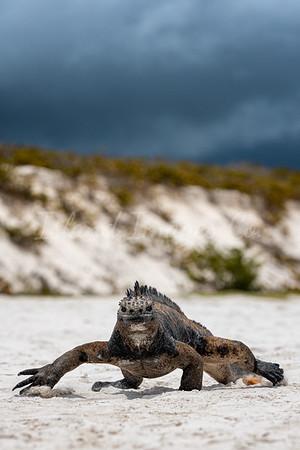 Storming Tortuga Bay