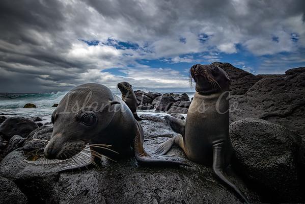 Sealion pups in Galapagos 3