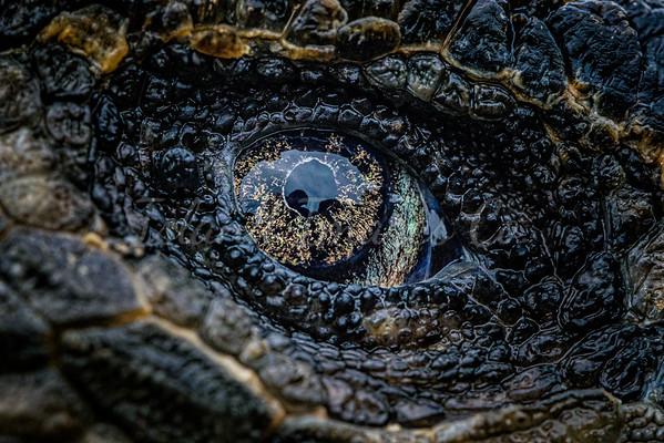 Godzilla Eyes