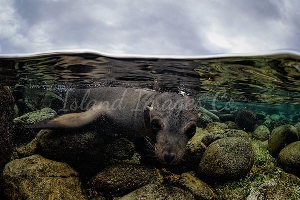 Playful Seal UW 3