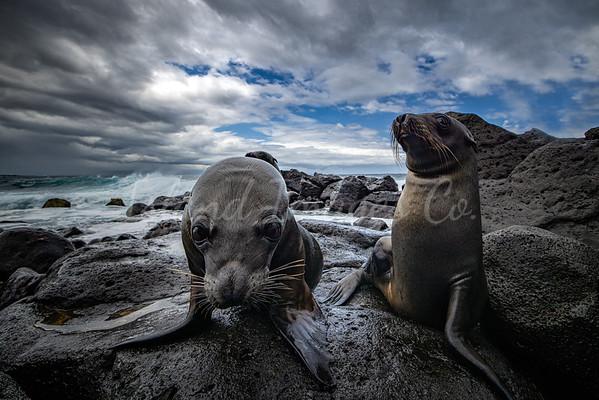 Sealion pups in Galapagos 2