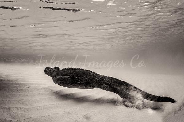 Underwater with Godzilla bnw