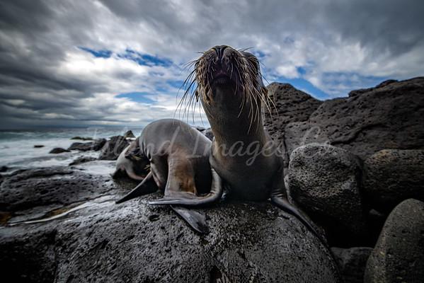 Sealion pups in Galapagos