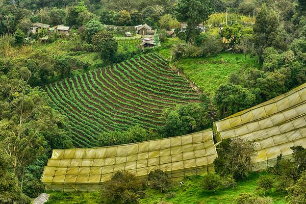 Farming in Banos Valley