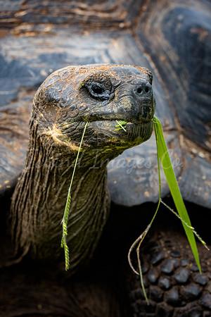 Galapagos portrait