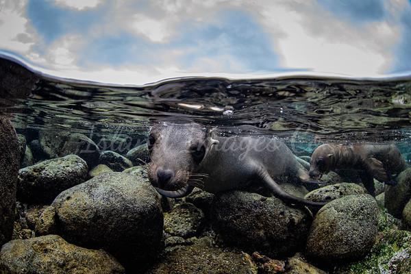Playful Seal UW