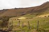 Fields near Papallacta Pass