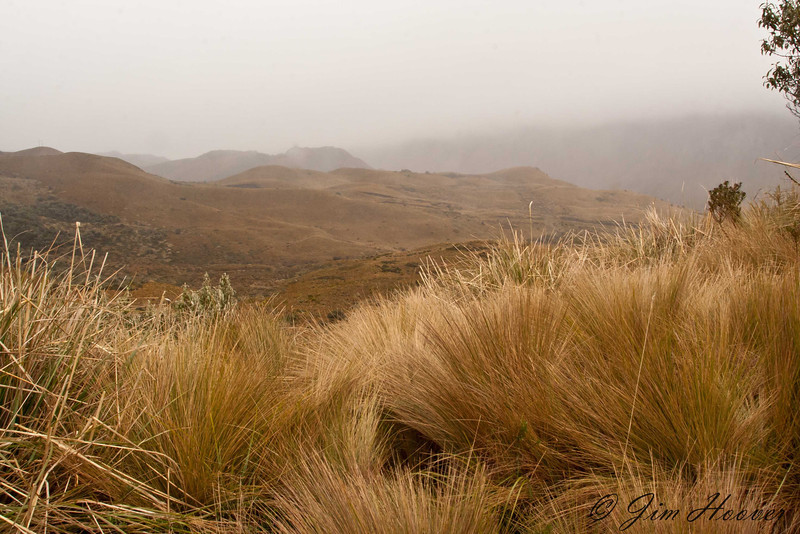 Papallacta Pass, western side of the Andes, near 14,000 ft.
