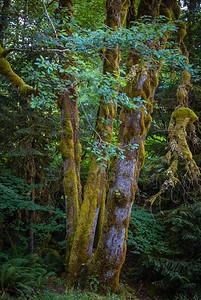 Tall Moss 2