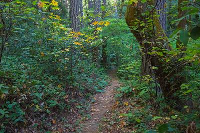 NZ Trail