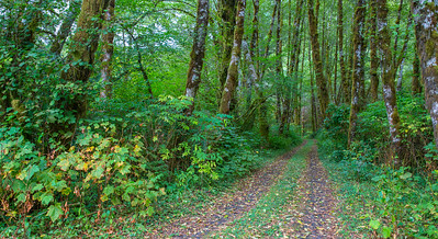 Tillamook Trail 1
