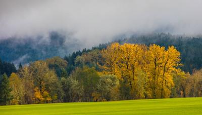 Oregon Field