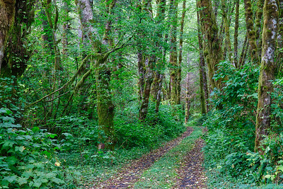 Tillamook Trail 2
