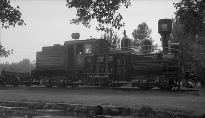 2018.15.N64L.8214--ed wilkommen 116 neg--Comox Logging & Railway Co--Shay steam locomotive 12--near Courtenay BC--no date
