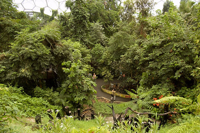 Inside The Rainforest Biome (8)