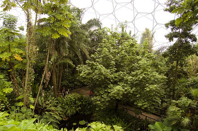 Inside The Rainforest biome (5)