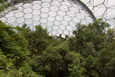Inside The Rainforest Biome (9)