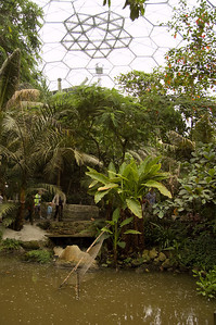 Inside The Rainforest Biome (2)