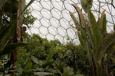 Inside The Rainforest Biome (1)