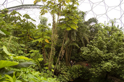 Inside The Rainforest Biome (6)