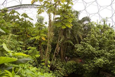 Inside The Rainforest Biome (6)