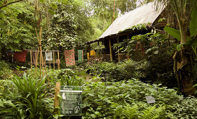 Malaysian House...in the rainforest biome