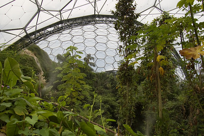Inside The Rainforest Biome (7)