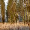 Tree sentries