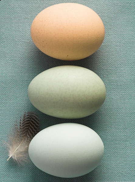 Cotswold Legbar Eggs