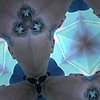 Eye Eye  fun with iPhoto booth. Kaleidoscope